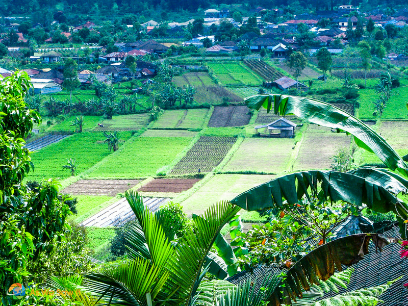 garden Fields in Bedugul