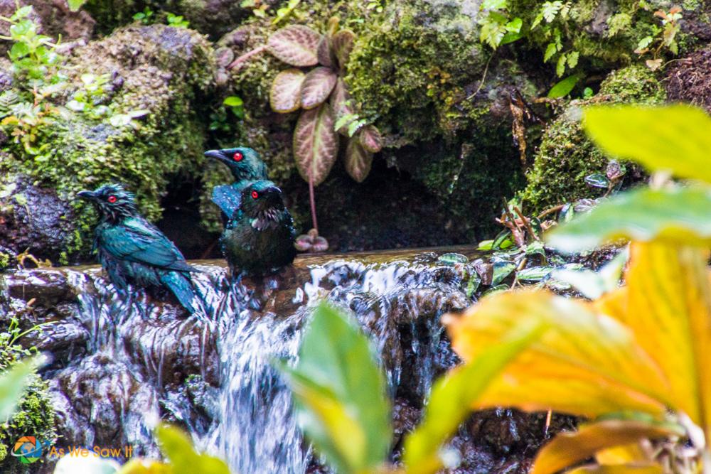 Birds enjoying the water in Singapore Botanic Gardens
