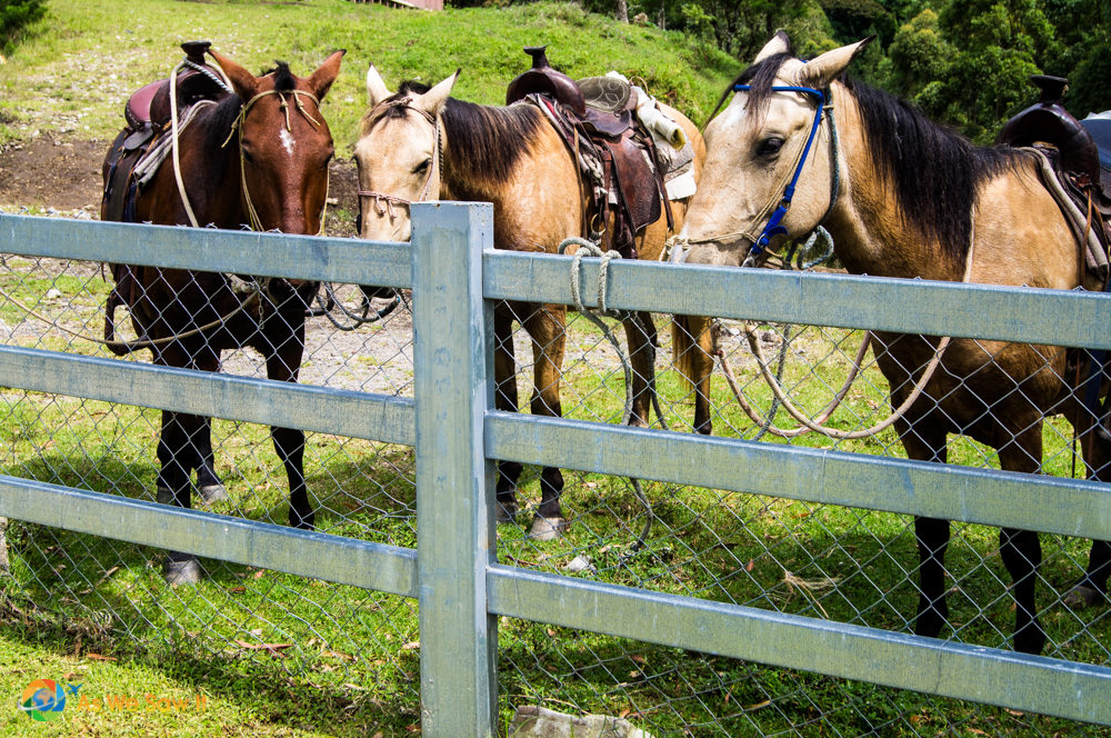 Our team of horses for the day.