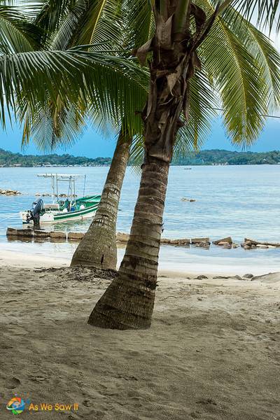 Palm trees on a beach in Bocas Del Toro, Panama. Boat on the water in the background.