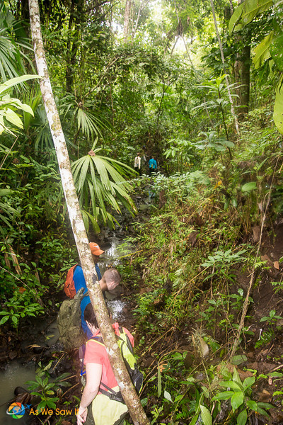 Hiking along a creek in the Darien Gap