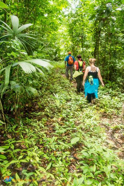 Hiking in the pristine Darien rainforest