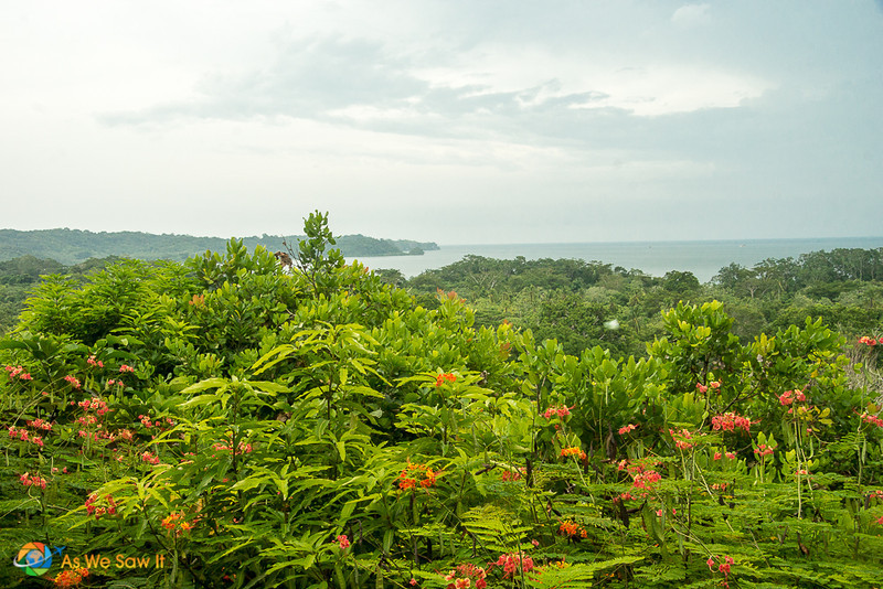 canopy view of the pristine tropical rainforest and ocean