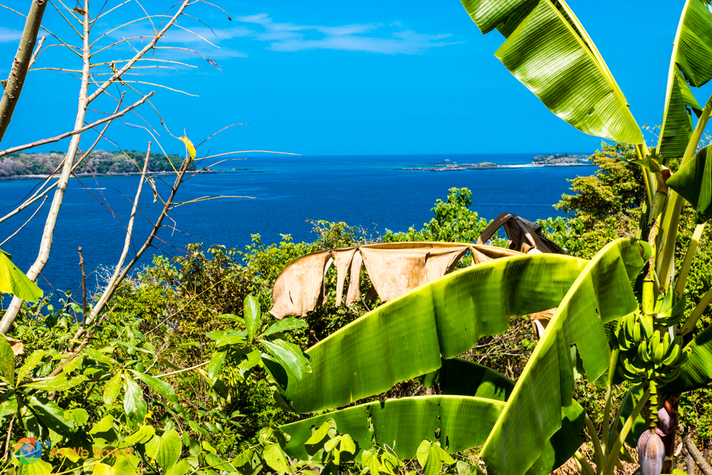 Lush greenery surrounds your view from the top of a bluff.