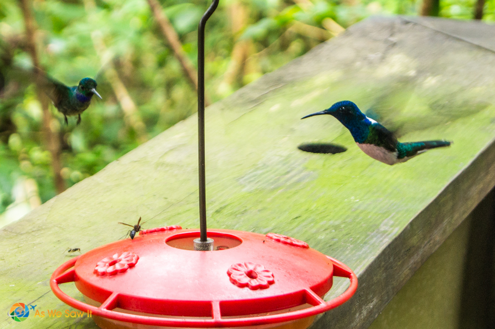 Hummingbird feeders and the local dive bombers.