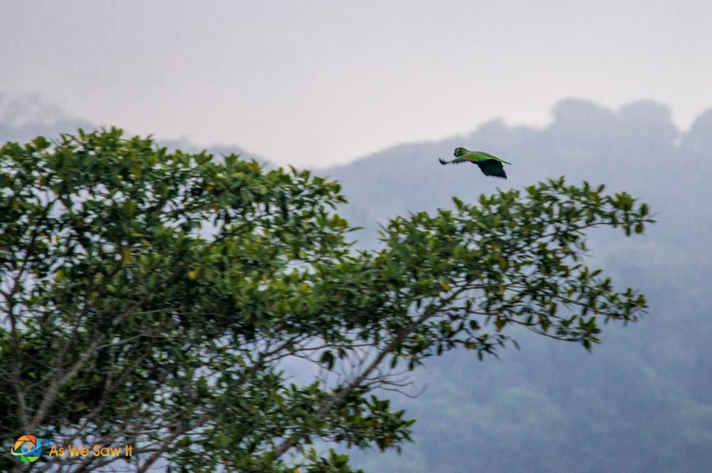 Flying parrot.
