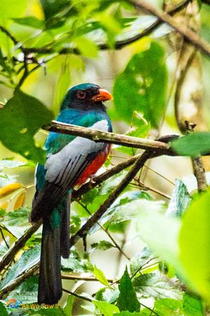 Colorful bird seen in Panama