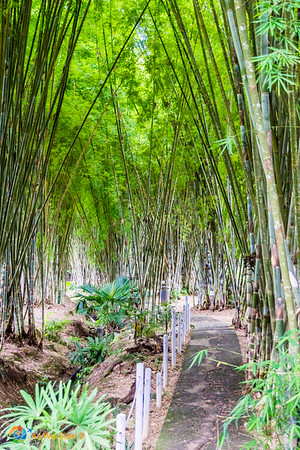A bamboo-lined pathway through the Summit Botanical Gardens and Zoo.