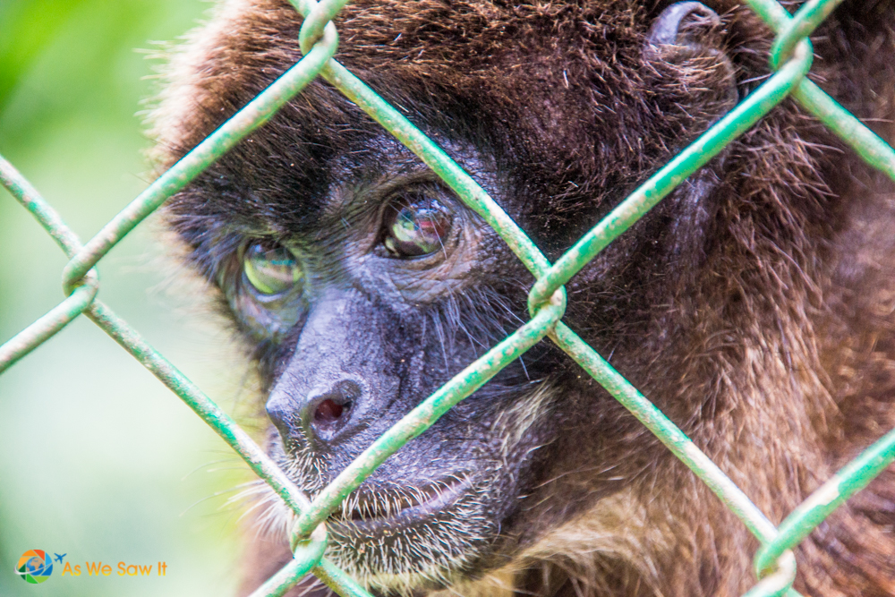 This Gibbon loved having his photo taken here at Summit.