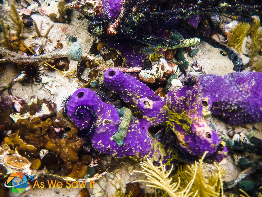 Love the purple on these sponges.