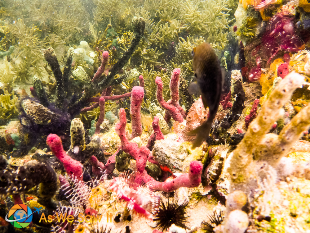 View out over the reef with a Damsel fish being camera shy.