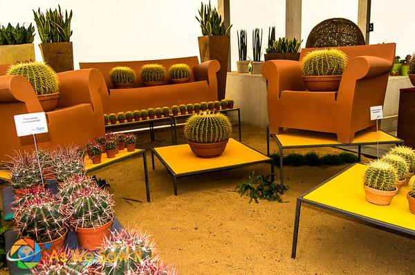 display of cacti at Koblenz flower market