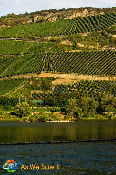 Vineyards on the side of a hill as seen from a river cruise ship