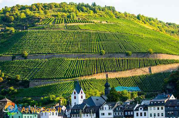 Middle Rhine valley vineyard on a hill along the river