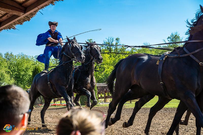 Bareback horse riding by Hungarian cowboy