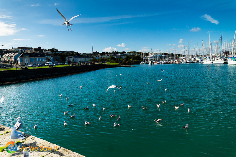 Seagulls at Howth marina
