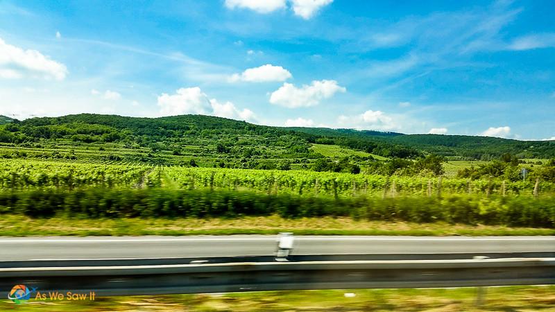 Vineyards in Slovakia.