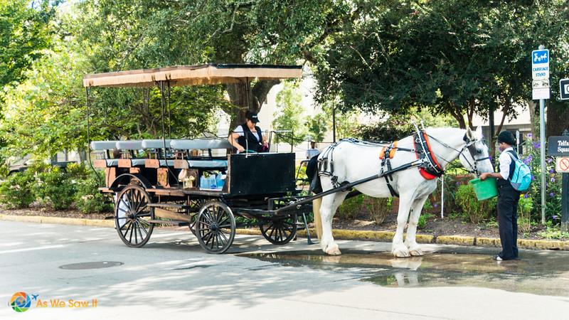 Horse drawn carriage in Savannah