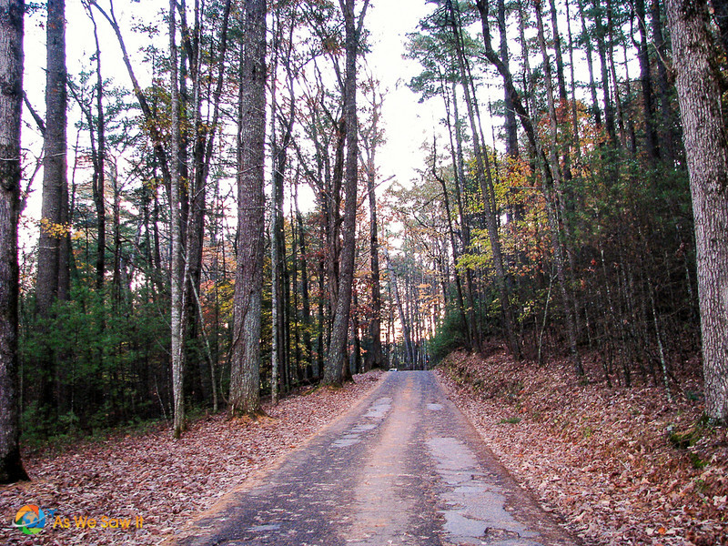 An autumn road in Cades Cove, Tennessee