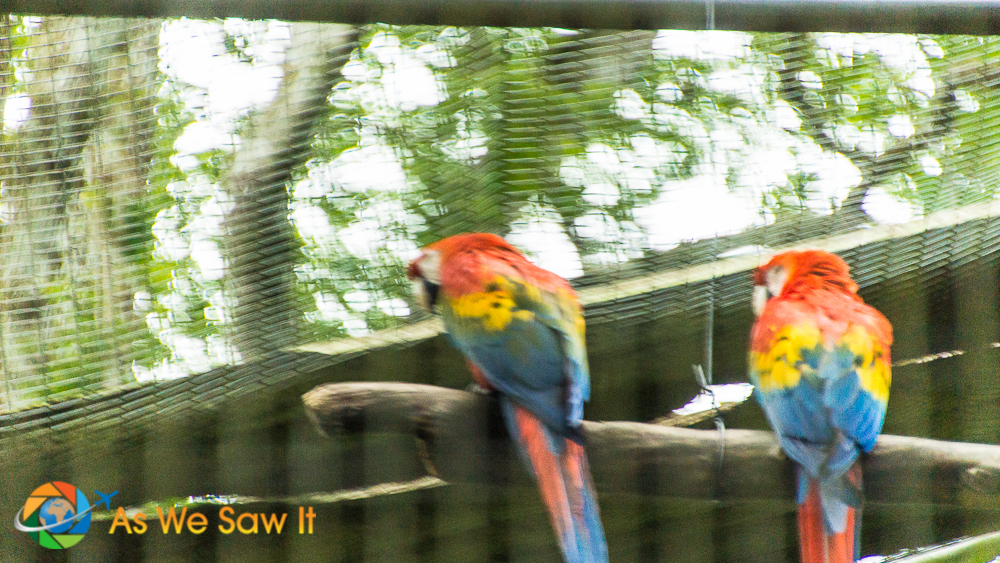 Scarlet macaws at AmaZOOnico animal rescue center near Tena, Ecuador