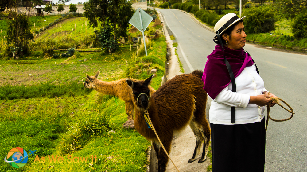 Ecuadorian woman with llamas