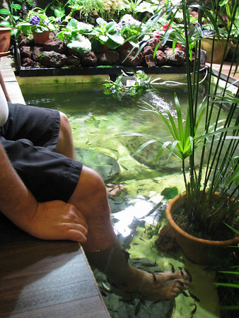 Dan's feet in the water, getting a fish pedicure at a fish spa